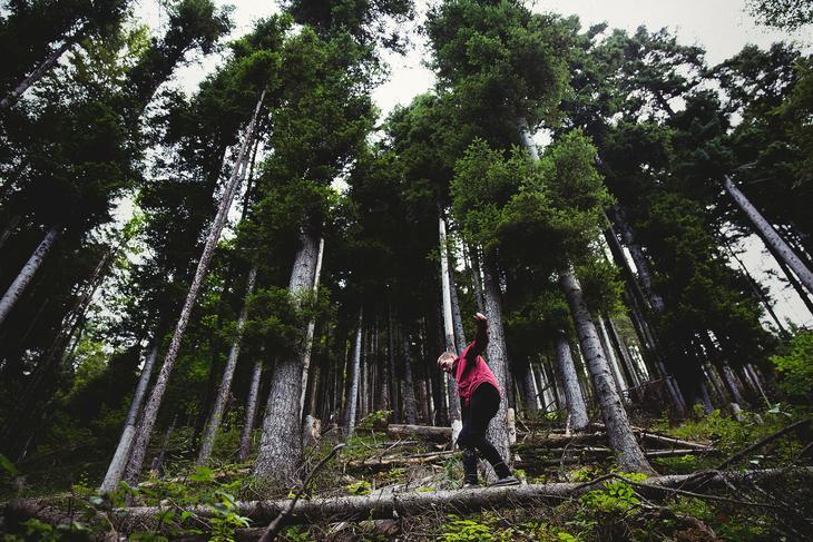 Illustrasjonsbilde: Skogen er en viktig fornybar verdi. Unsplash.com