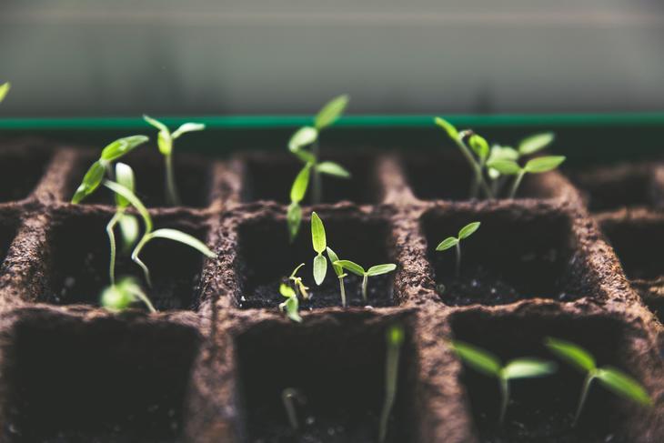 Det spirer og gror - og vi setter så inderlig pris på det! Takk alle frukt- og grønnsaksbønder! Foto: Unsplash