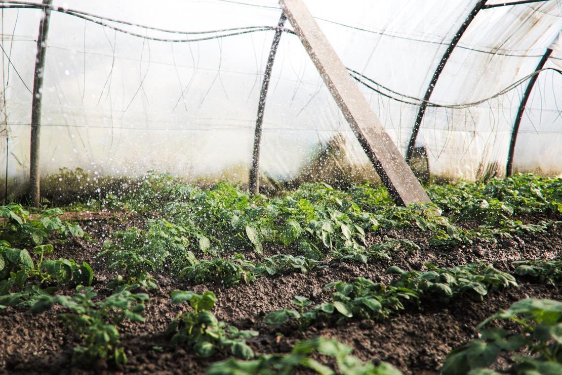 Dyrk grønnsaker på norske premisser! Foto: Ewan Hesry, Unsplash