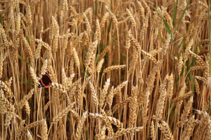 Det er en uheldig trend at arealer som egner seg til korn blir tatt i bruk for å dyrke gras. Det fører til at arealene i mindre tilgjengelige områder gror igjen, og selvforsyningen går ned.