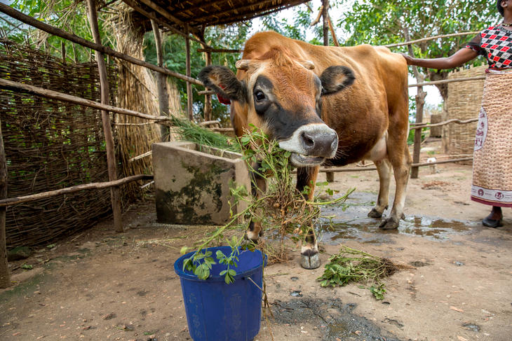 Mange malawiske bønder har mistet sin eneste inntektskilde - matproduksjon. Hus og matjorda er skylt bort med flommen og syklonen som har rammet landet. Foto: Tine Poppe